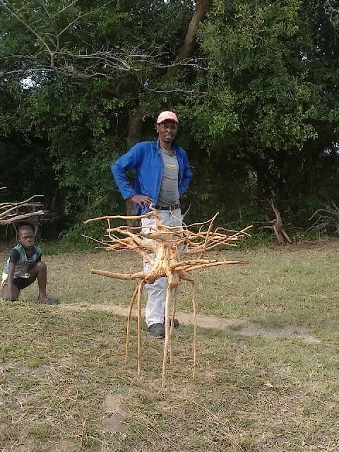 枝(?)ぶりが良い木
