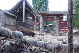 レソト生まれの白人オーナーが経営する名物ロッジ、「セモンコン・ロッジ」。ロッジの前を人や家畜が行き交います。
