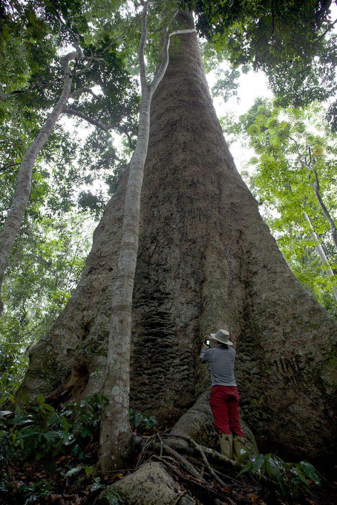巨木 Photo by Akira Kawai