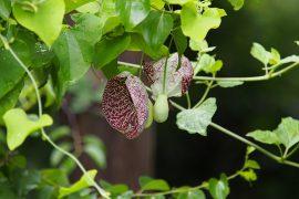 雨が少ないようでしたが、植物は比較的元気