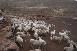 ポニー・トレッキングで滞在する村は、牧畜を営むごくごく一般的な家庭です。