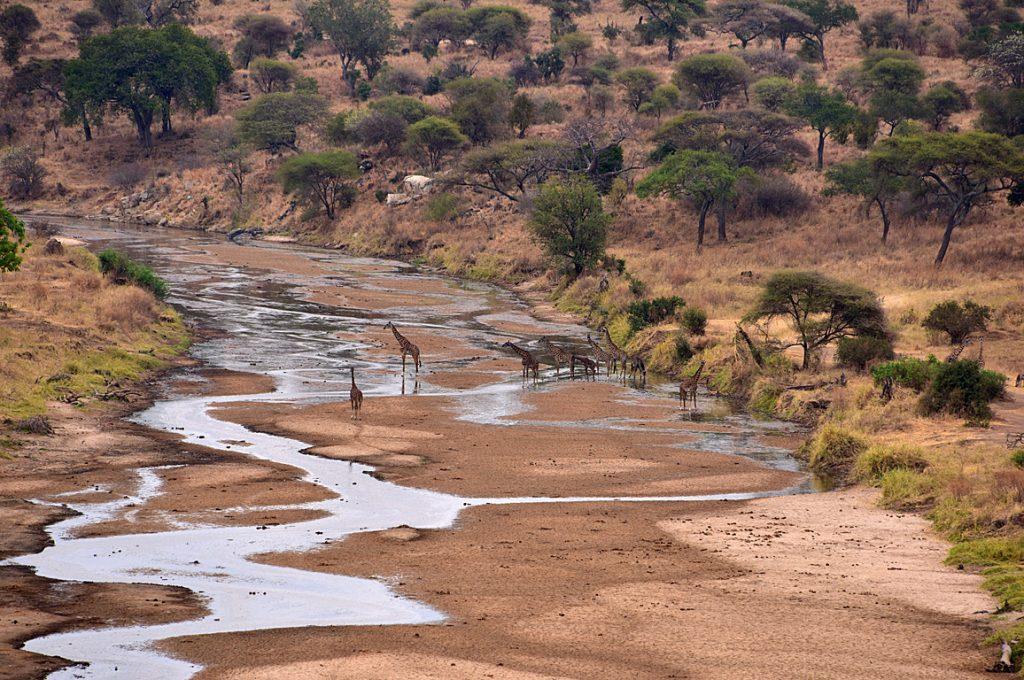 タランギレ川と水を飲みに集まる動物1