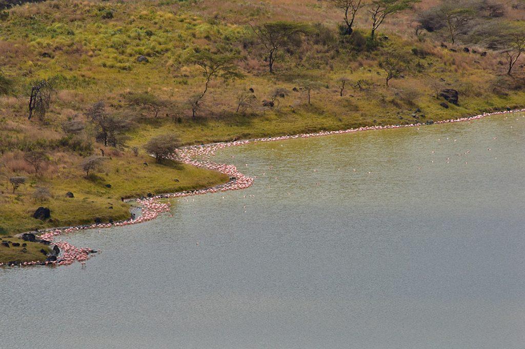 モメラ湖の湖岸とフラミンゴ