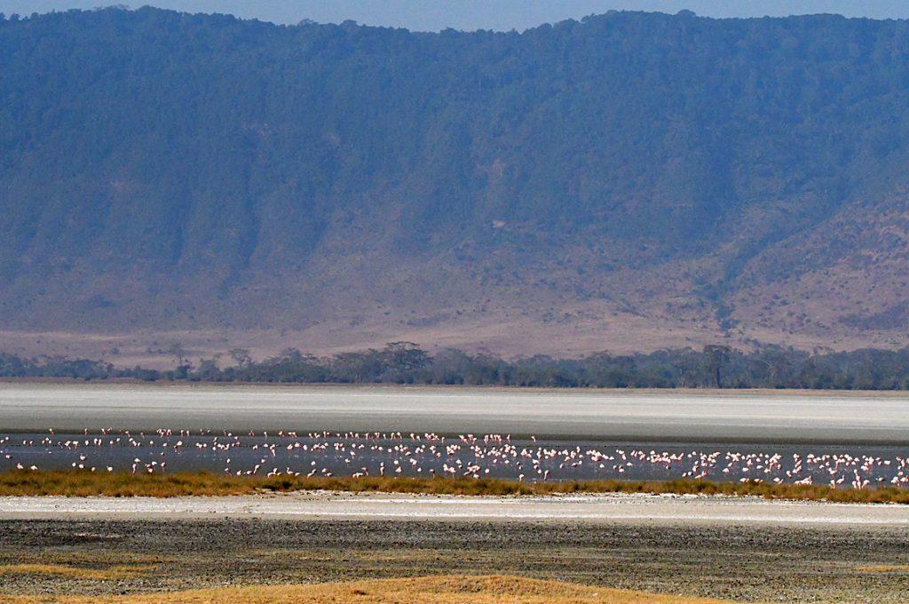 塩湖のコフラミンゴ