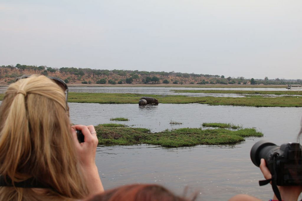 クルーズではゾウやカバがたくさん見られます
