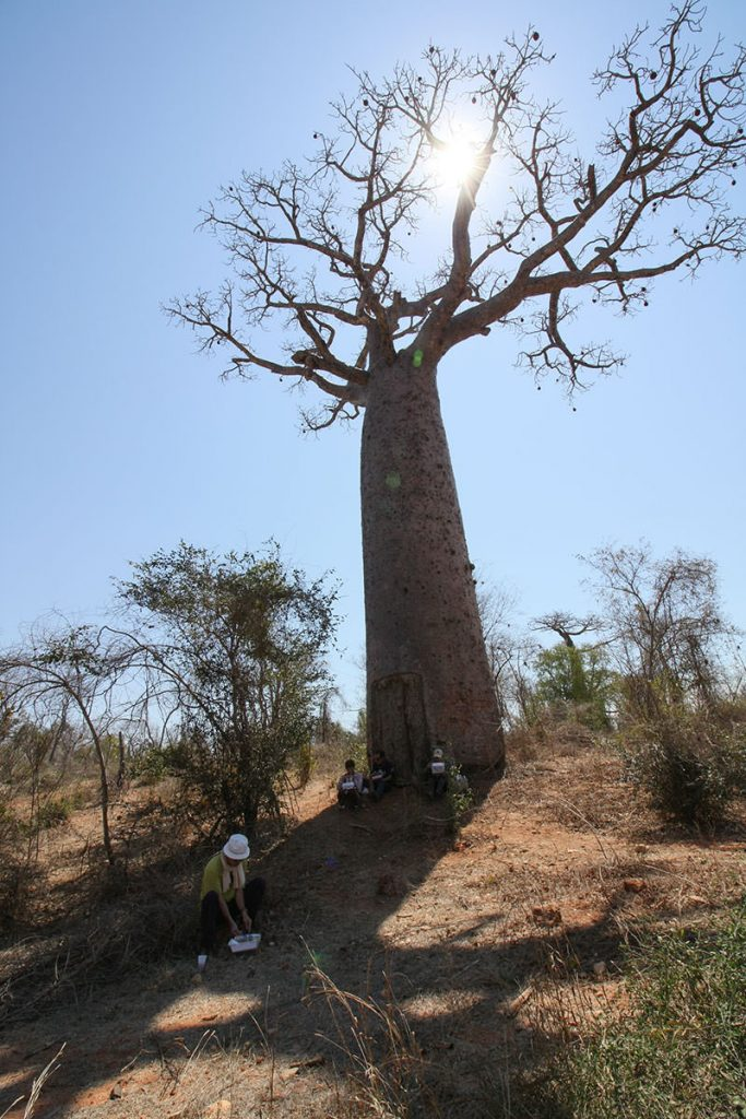 バオバブの木陰で贅沢なランチタイム。