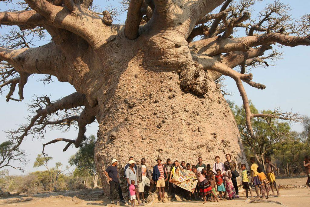 木の幹の周囲が約30m近くもあり、樹齢は1000年近くとされるツィタカクイケ(バオバブの種類:アダンスニア・グランディディエリ)