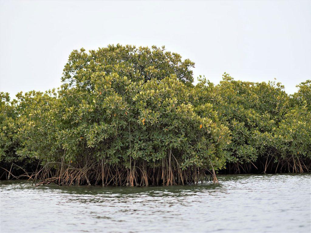マングローブの間を駆け抜け、島から島へとアイランド・ホッピング。