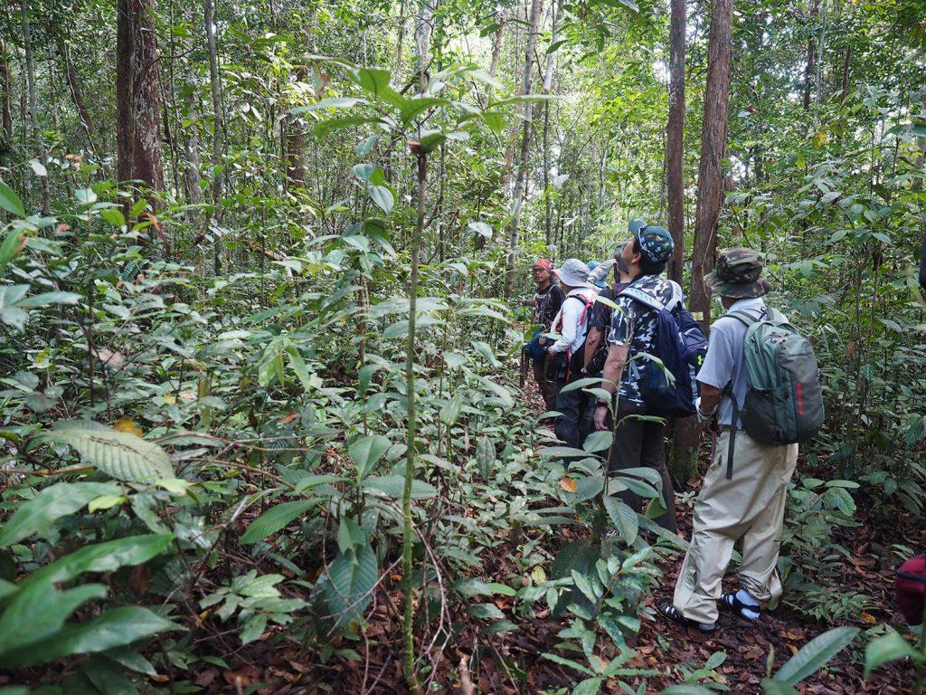 二次林と原生林の間のような森を歩きます