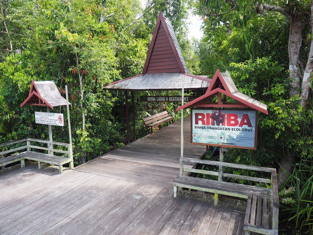 公園内唯一のリンバ・オランウータン・エコ・ロッジ