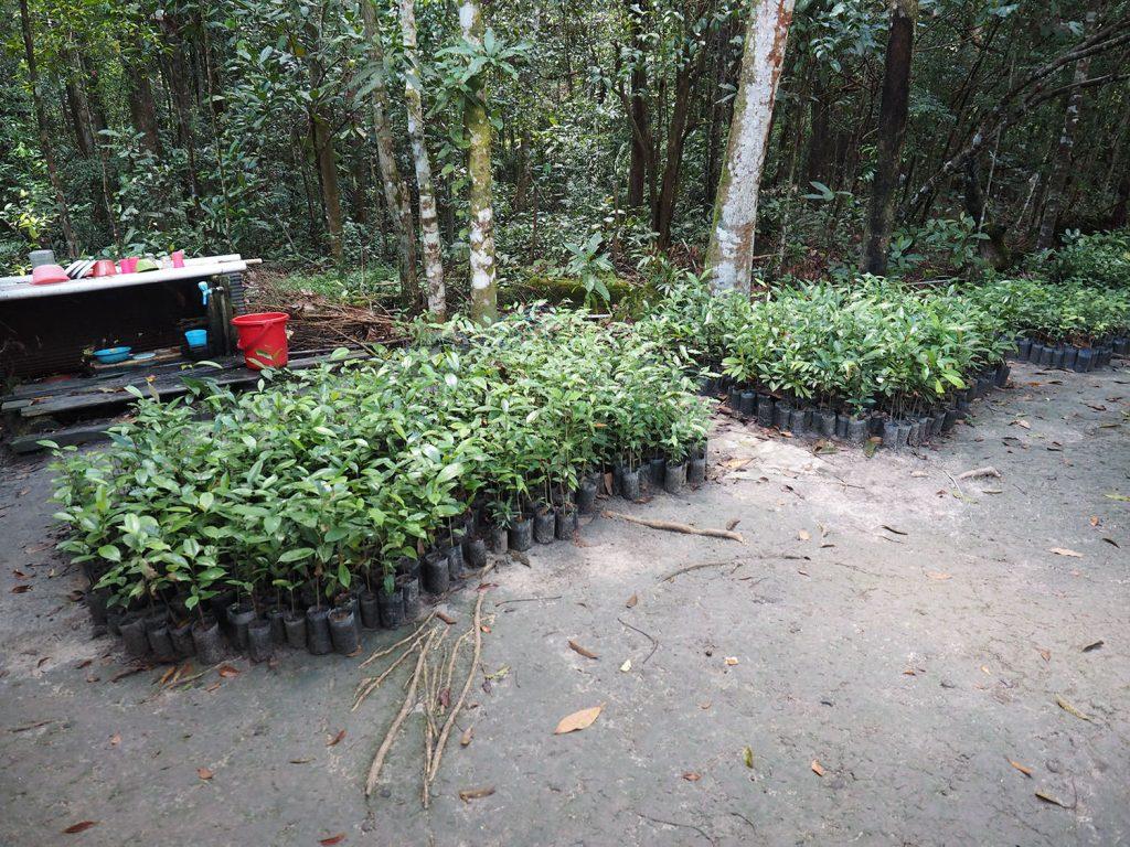 多くの異なる種類の森の樹々の苗