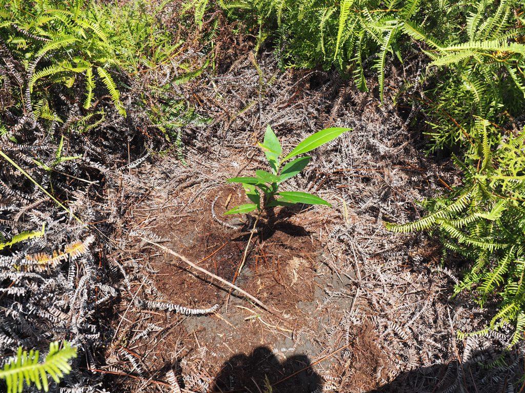 参加者全員でひと苗ずつ植林してきました