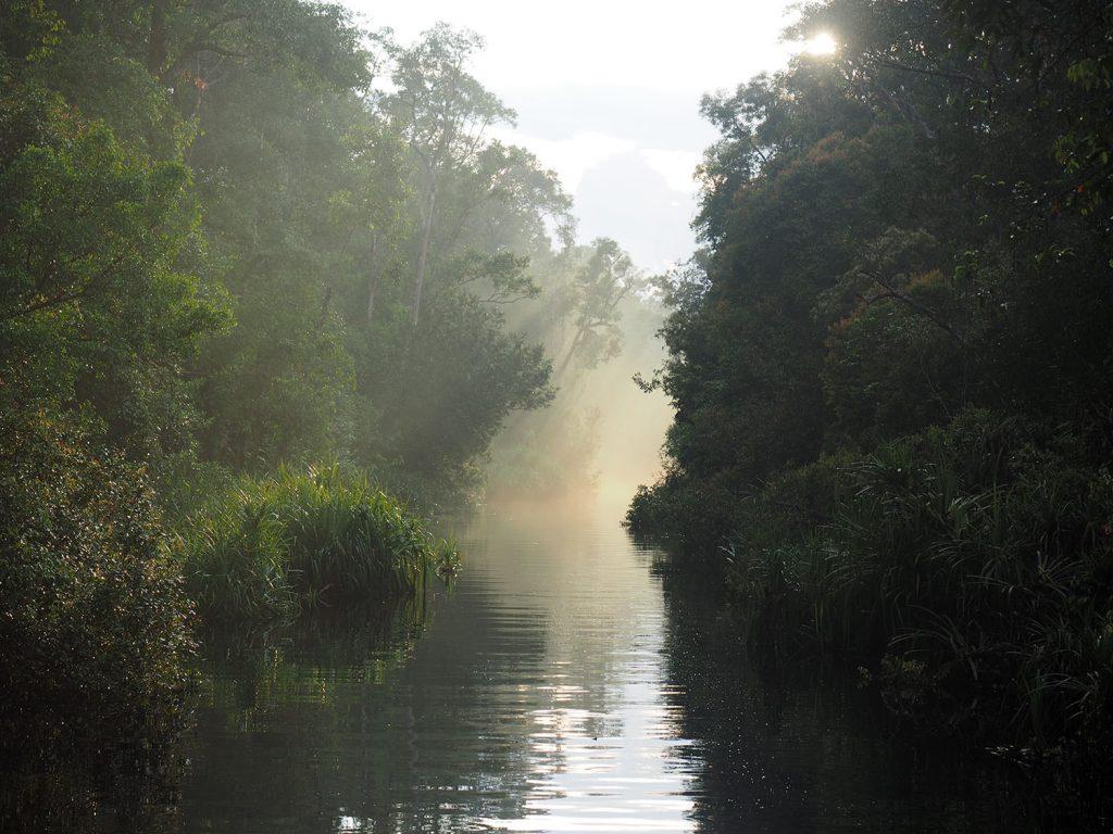 幻想的な雨上がりの森と川