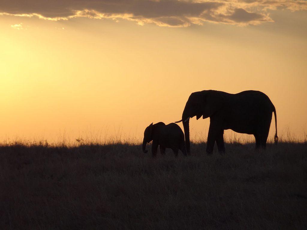 夕陽とゾウの親子