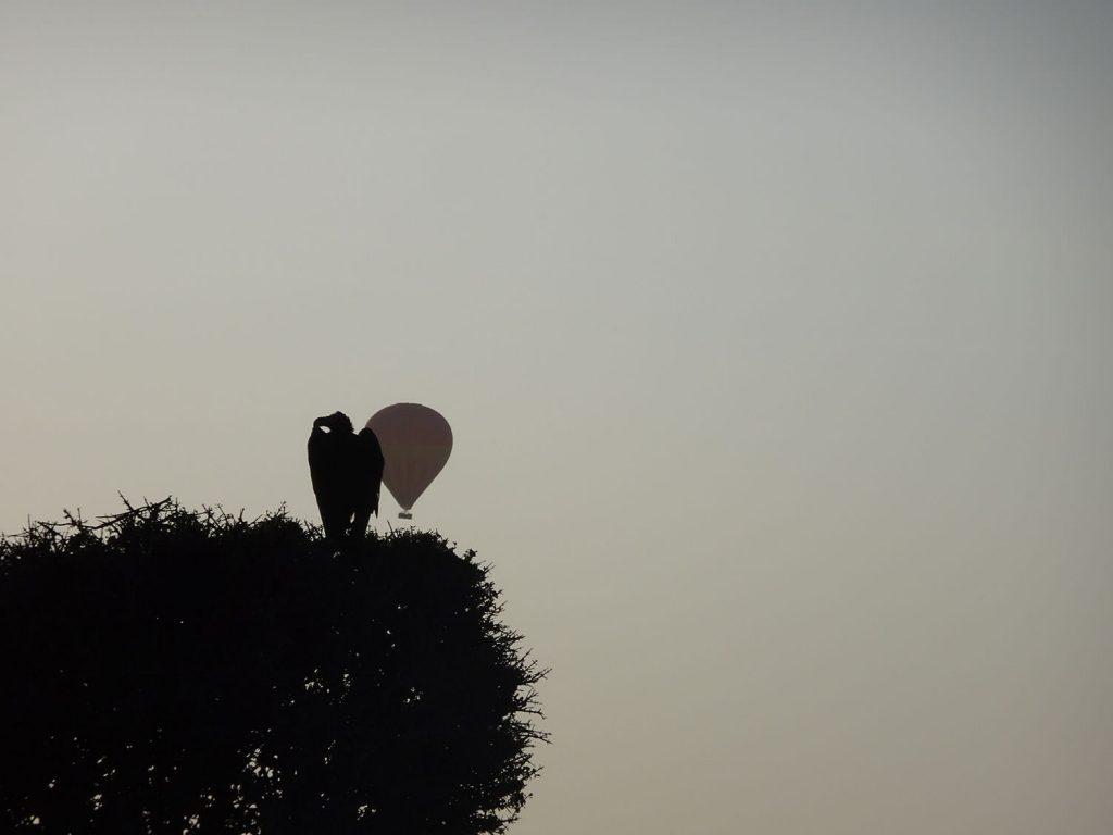 ハゲワシと気球