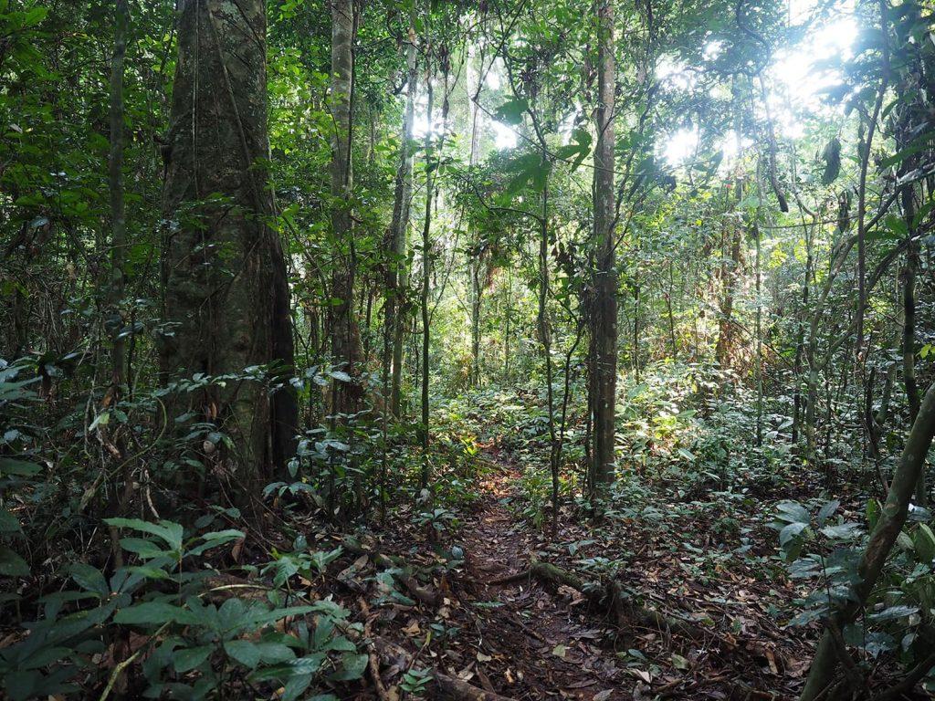 意外に歩きやすい森の道をたどってバカの村へ