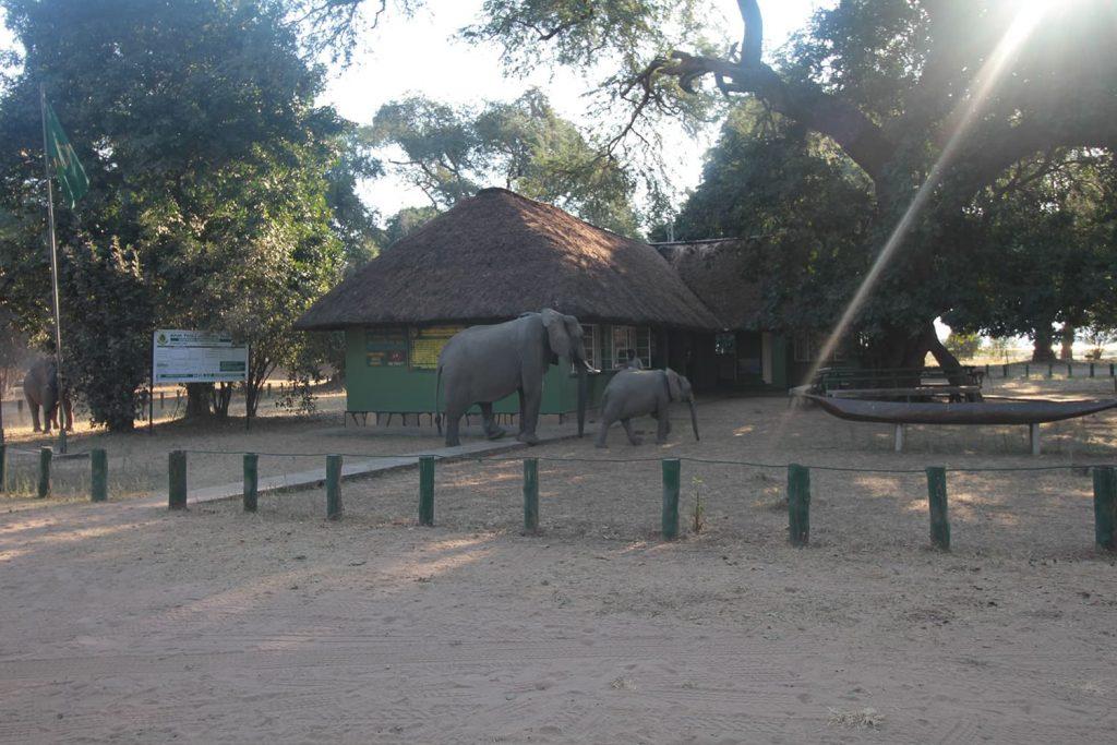 公園のゲートで早々に挨拶しに来てくれたゾウ