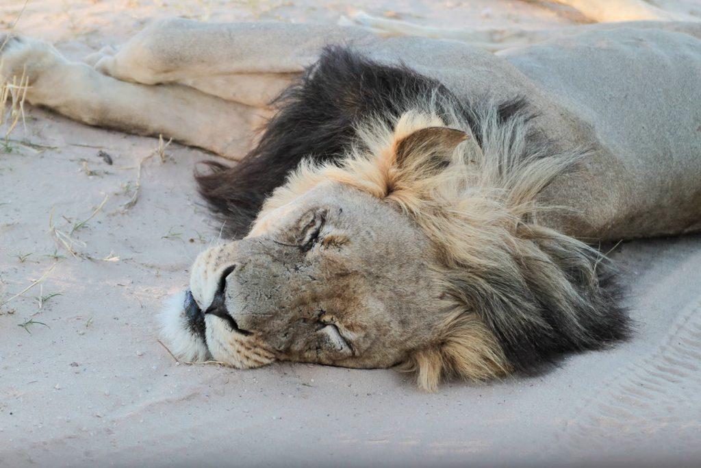 砂の上で昼寝。王者に許された特権