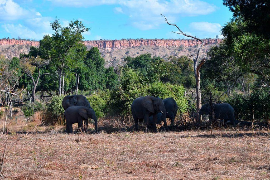 ゴナレゾウ国立公園と言えば象の群れ