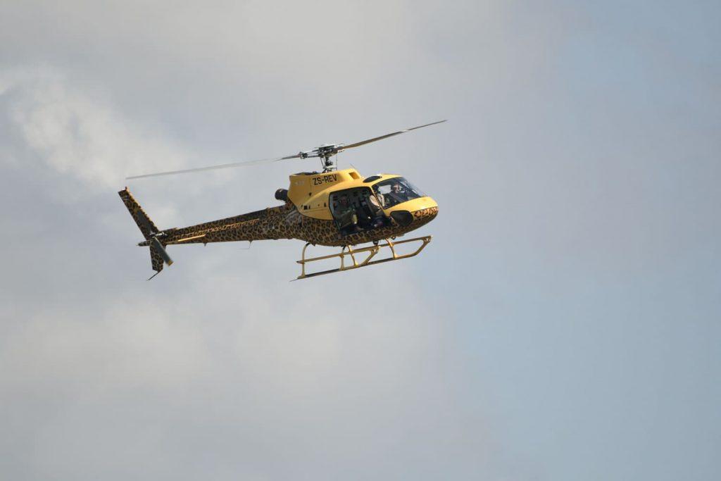 上空のヘリからサイを探します