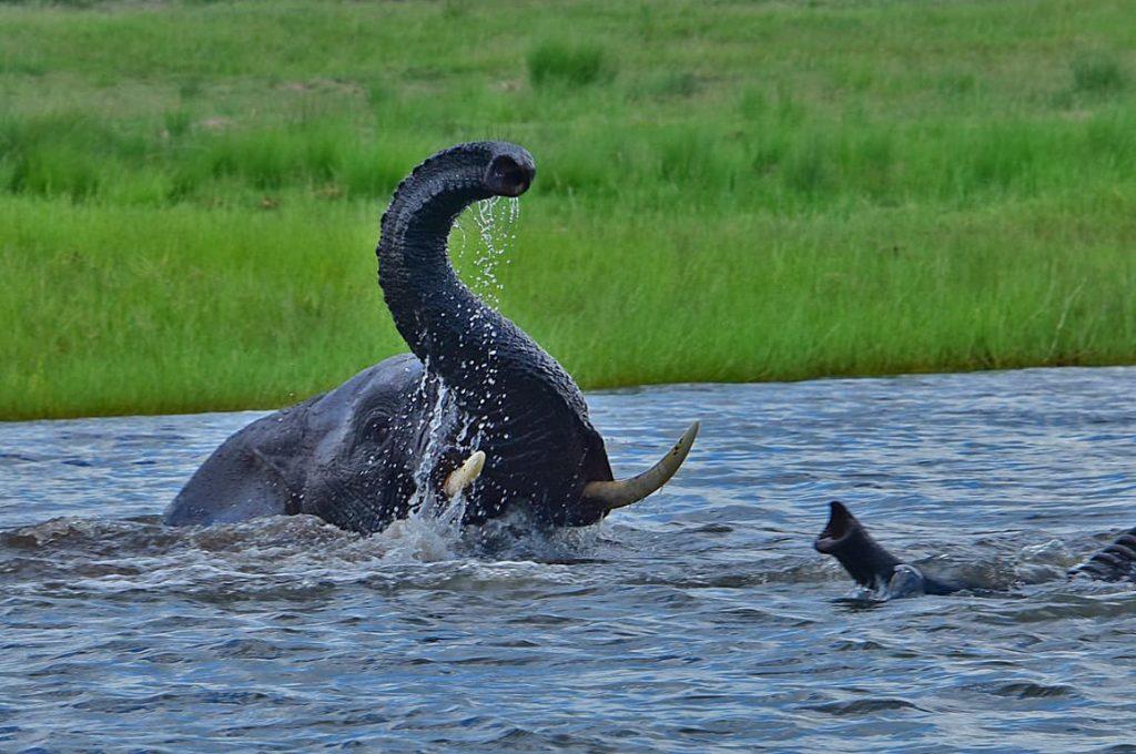 アフリカゾウの水浴び2
