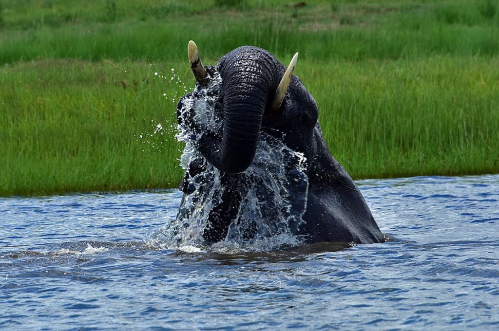 アフリカゾウの水浴び3