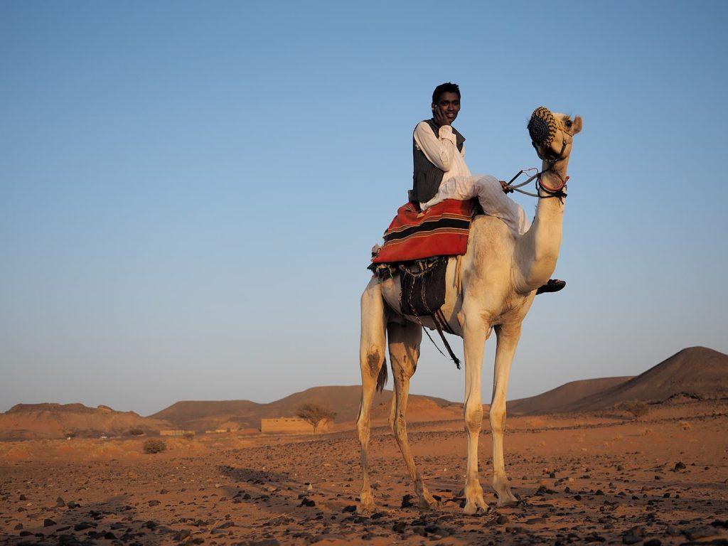ラクダも見慣れてきましたが、近くで見るとやっぱり大きいですね。