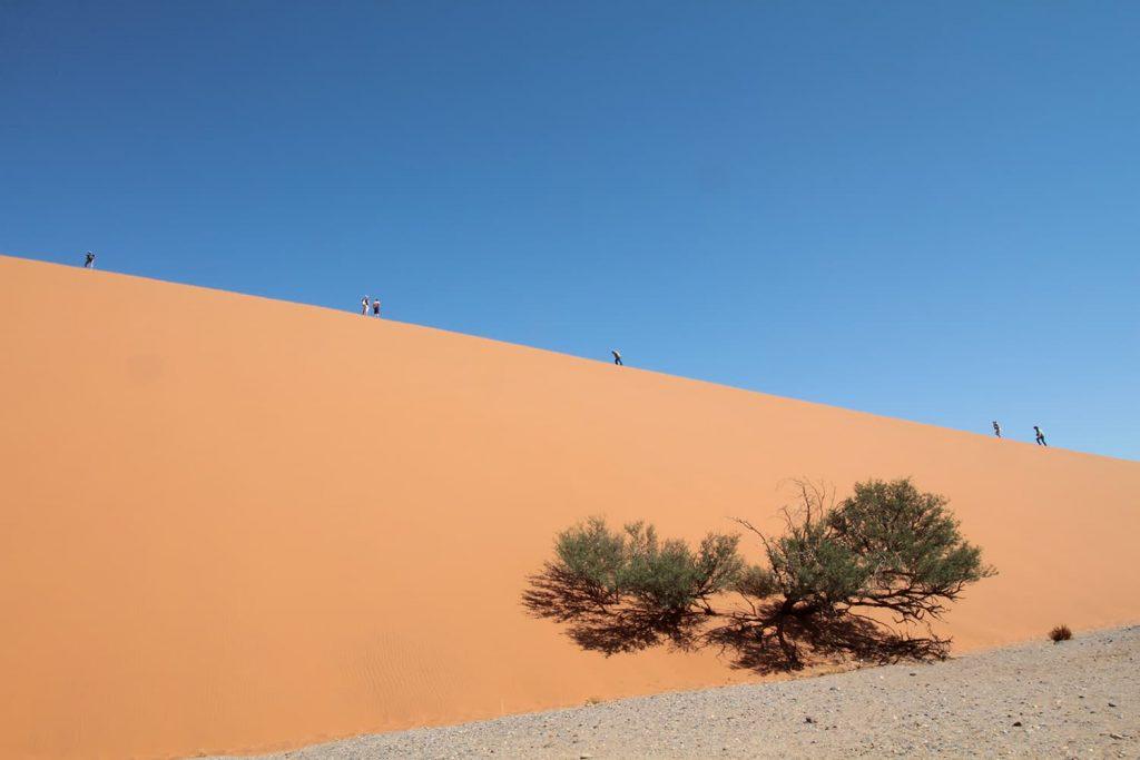 砂丘に登るのは一苦労です。2