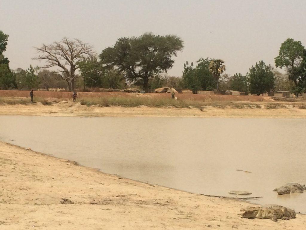 水場にはたくさんのワニが棲んでおり、その近くには村がある。人とワニとが共存しているのが見てわかる