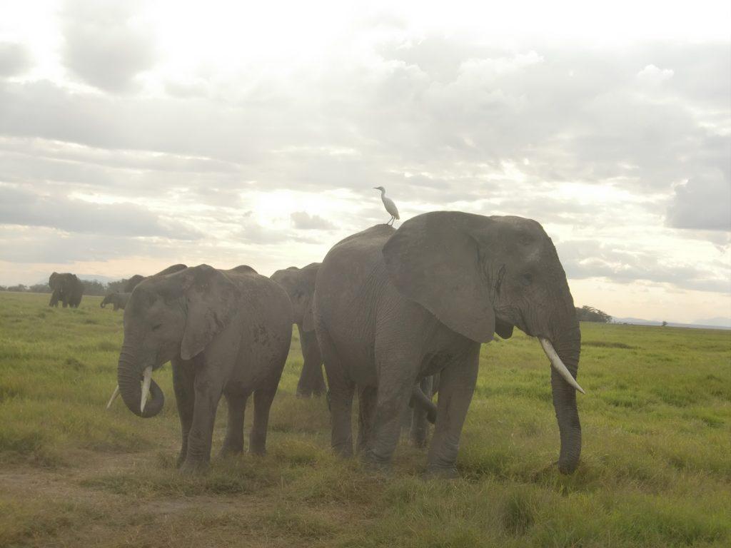 サファリカーの前も後ろもゾウ、ゾウ、ゾウ。集団に囲まれます。