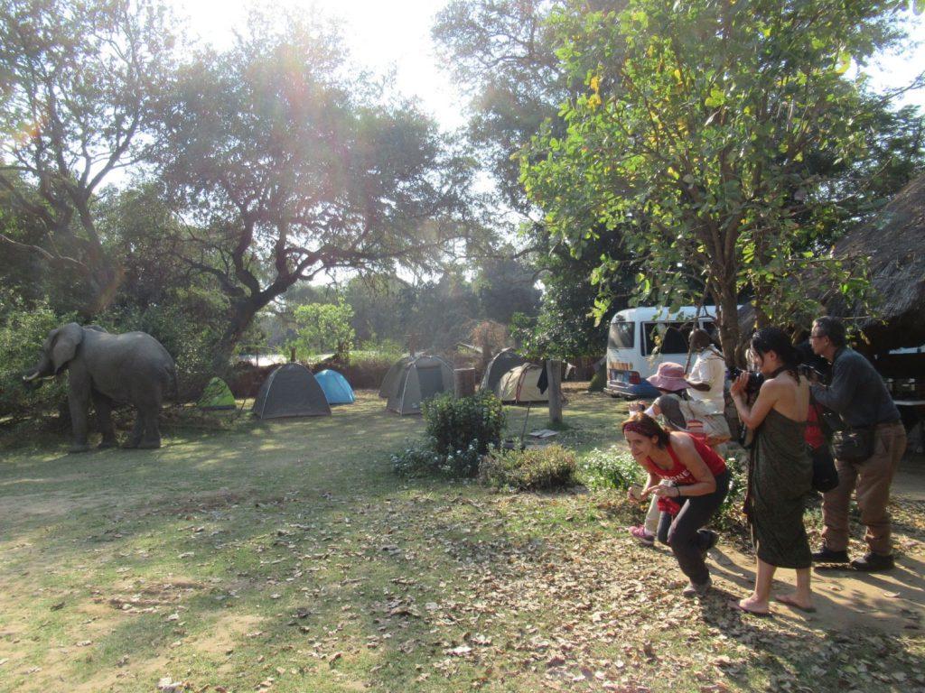 ゾウが敷地内にやってきてお客さんは大喜び、後でガイドさんから近すぎると注意されてしまいました。