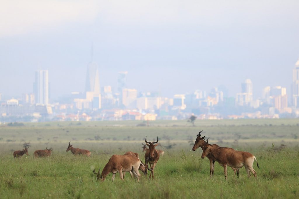 ナイロビ国立公園も緑に染まってきている