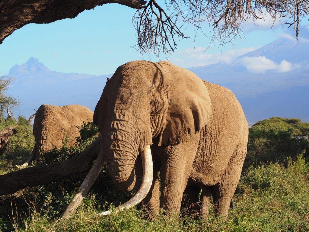 この時期にだけ生える栄養豊富な草を求めゾウの大群が訪れます。