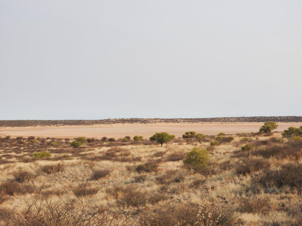 ここは半砂漠の公園で、とても平らな大地です。所々に大きなパンがあり、周辺に1つとか2つのウォーターホールがあります。動物が水を飲みにやってくるのでサファリはウォーターホールがチェックポイントとなります。