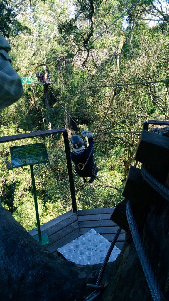 チチカマ国立公園では、キャノピーツアー(ジップライン)に参加しました