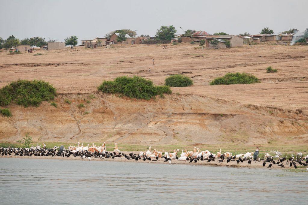 たくさんの水鳥が見られるのが魅力。後ろは漁村です。