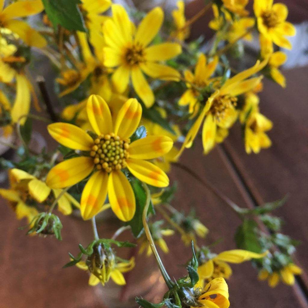独自の暦をもつエチオピアでは9月は新年。この時期にはマスカルフラワーと言われる黄色い花が咲いています!店内にも!