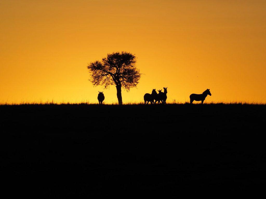 美しい夕日も、草食獣にとっては過酷な時間の始まりを意味します
