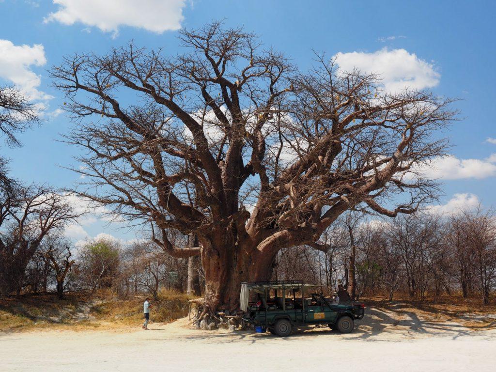 ナイ・パンのシンボル、ベインズ・バオバブの木の下で一休み