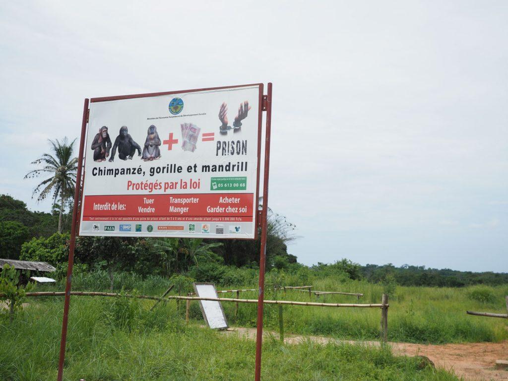 国立公園の入り口、かつて「ヤシ酒」を飲んで酔っ払うチンパンジーが生息していると学会で発表され、有名になった場所でもあります。会えるでしょうか?