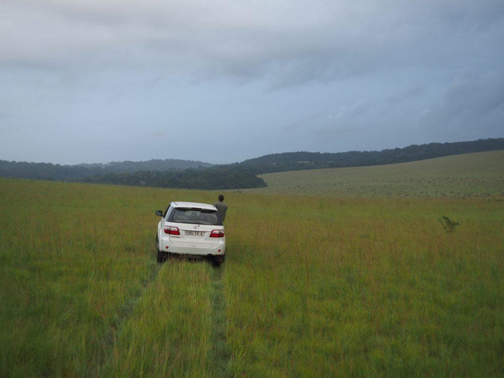 森の合間の平原部を野生動物を探してドライブ。なかなか簡単に野生動物には会えません。