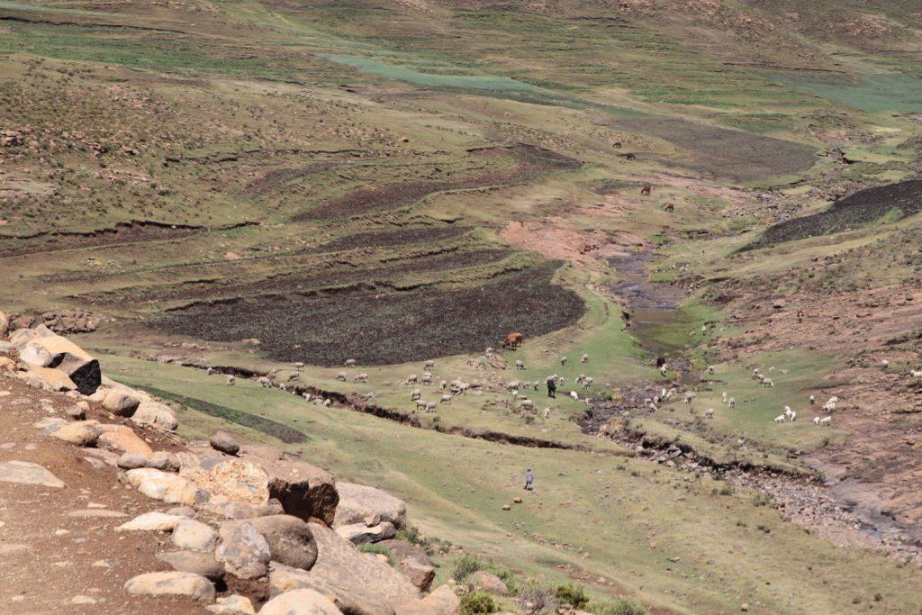 牧畜が盛んなので、至るところで放牧がおこなわれています