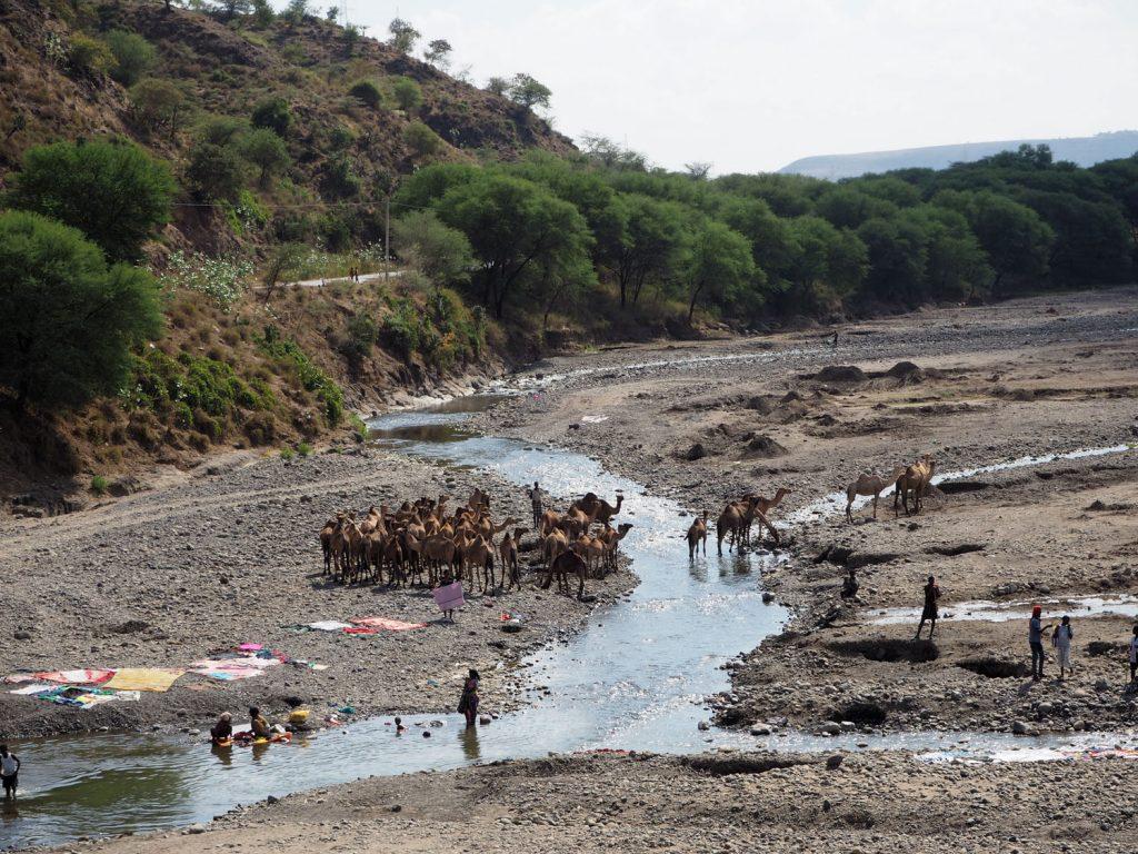 道中では、ラクダの水のみに出会うことも。