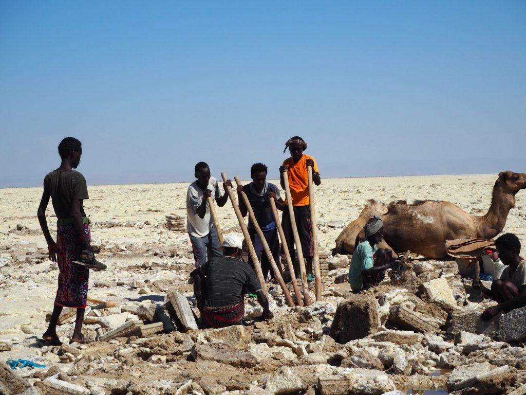 40℃近くもある炎天下、この土地に暮らすアファールの人々が塩の採掘に精をだしていました。