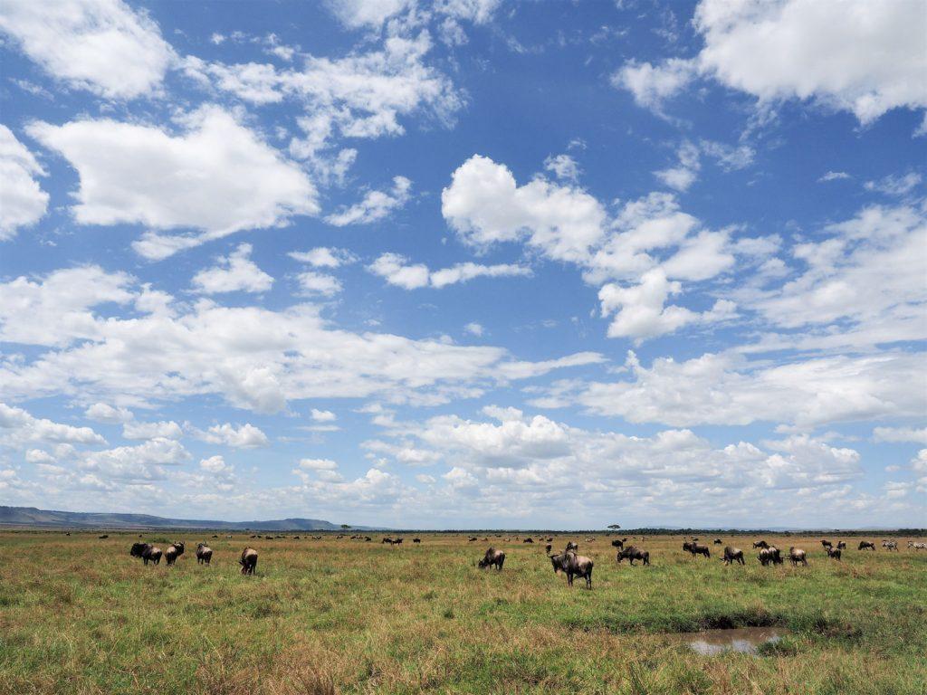 マサイ・マラの大草原