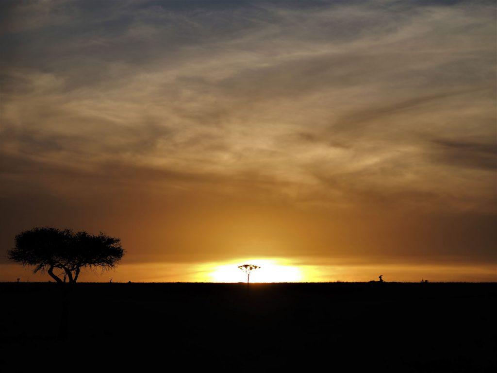 夕陽に溶けるようなアカシアの樹