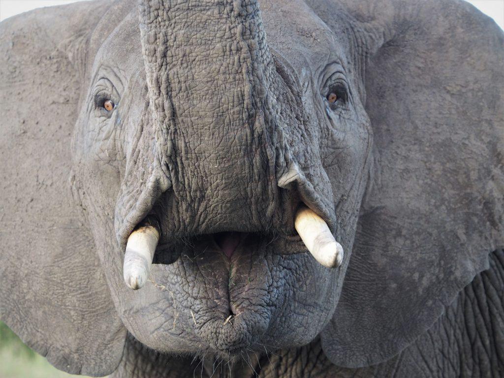 長々と観察していたら、子ゾウさんに怒られました。すんません。