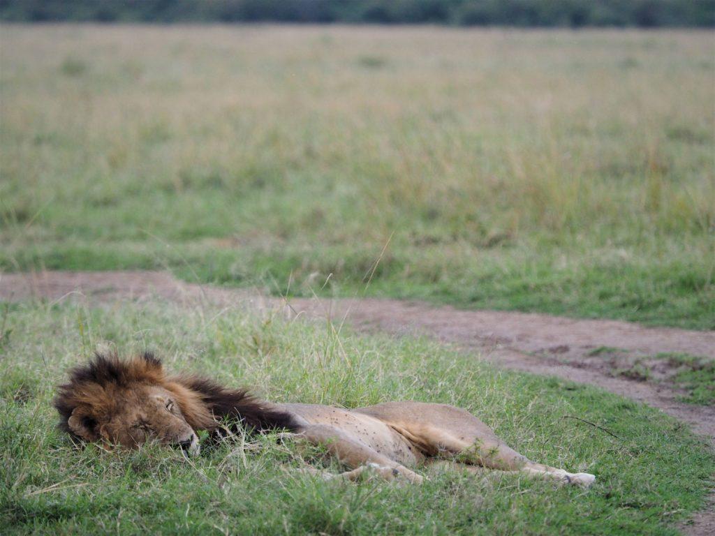 しっとり水分を含んだ草のベッドが気持ちよさそうです。