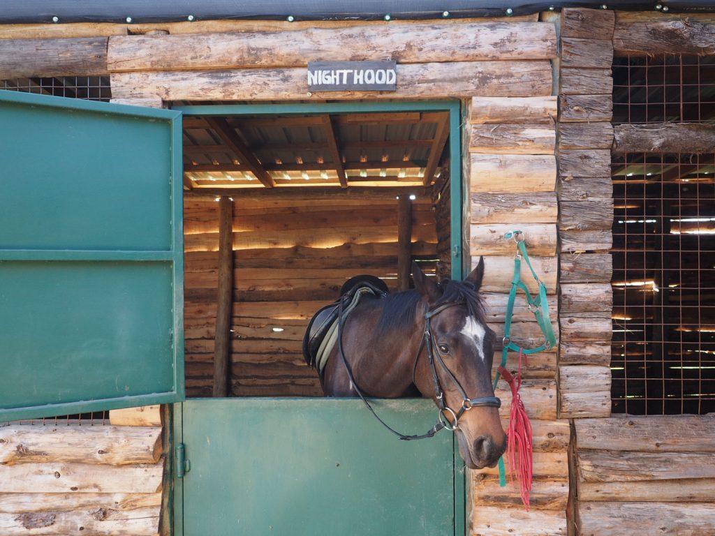 全部で6頭。よく訓練された馬が飼育されています。
