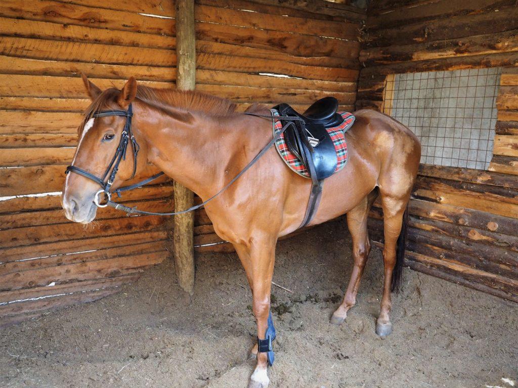 実は引退した元競走馬。ナイロビのホースレースで活躍した馬だけあって、みんな立派な体躯です。